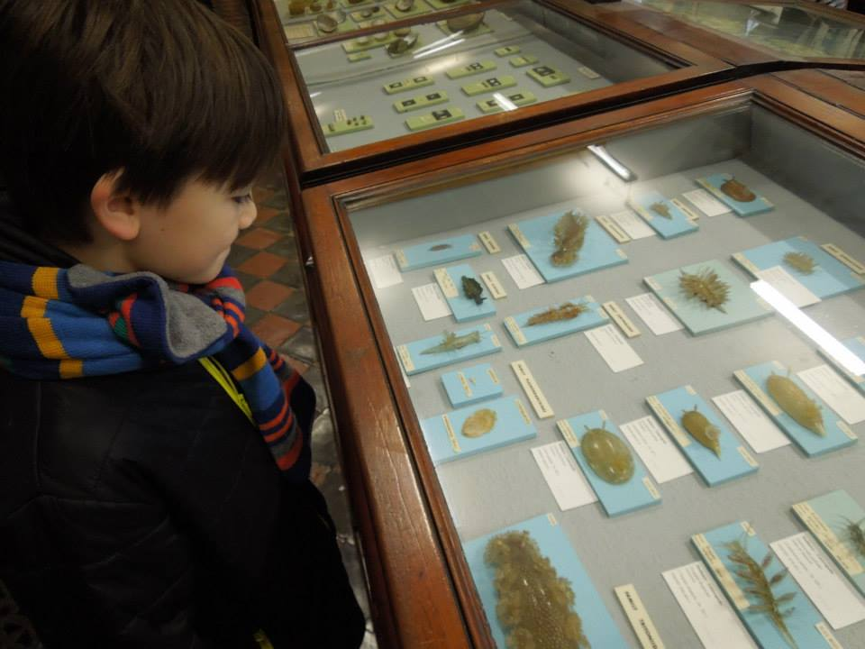 Dead Zoo, Dublin, glass specimens