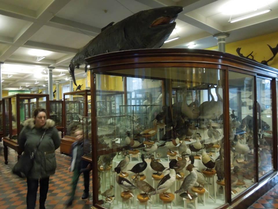 naturalhistory1