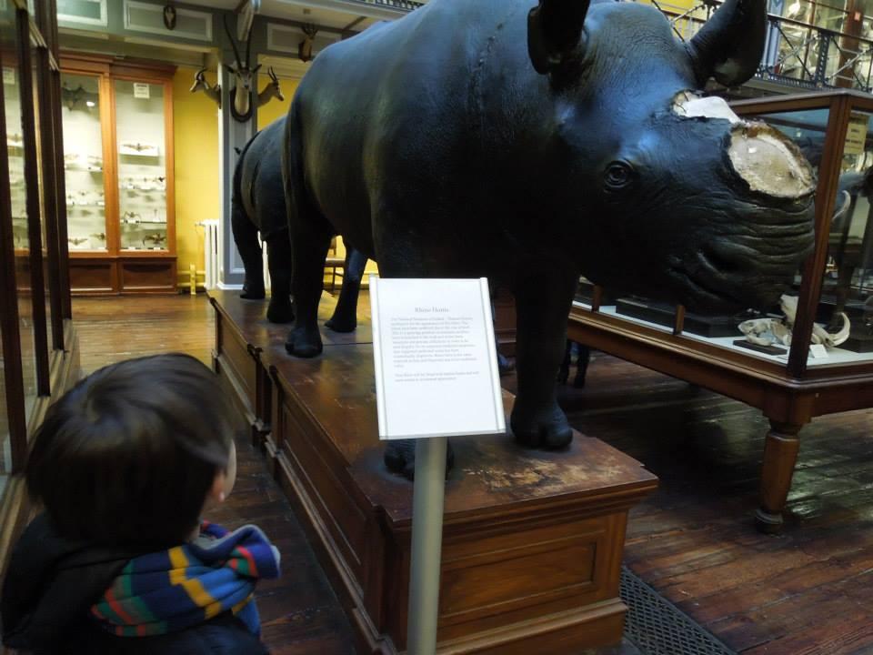 rhino, rhinoceros Dublin, Dead Zoo